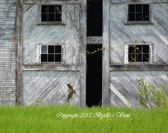 Barn Swallow 22: Through the open door