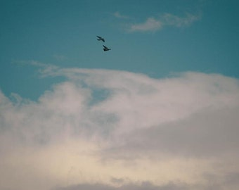 Birds, flying, sky, clouds, photography, free, carefree, home, decor, blue, white - Photo print, wall art