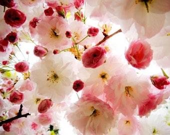 Cherry Blossom Photograph - Flower Art - Nature Flower - Sakura - Wall Decor - Botanical - Floral - Nursery Wall Art - Flower Photography