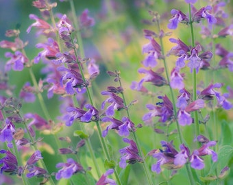Purple Floral photograph