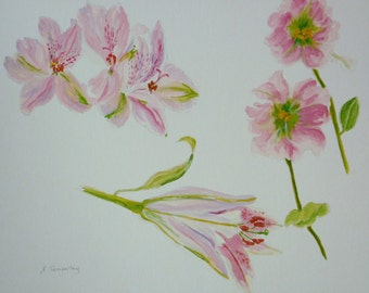 Botanical Flower study - pink and green
