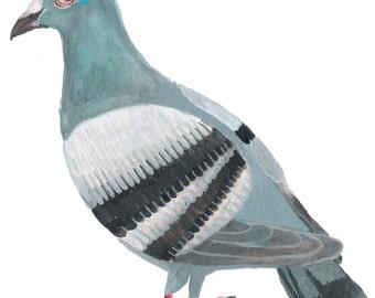 Paloma (Pigeon) #2
