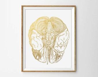 Anatomical Brain, Human Anatomy Print, Anatomy Poster, Human Brain, Doctor Print, Medical Poster, Gold Office Poster, Modern Home Print
