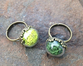 "Moss Terrarium Ring, Moss Ring, Reindeer Moss, Adjustable Ring, ""Vintage"" Style Terrarium Ring, New Fall Colors, Jewelry, Bridesmaid Gifts,"
