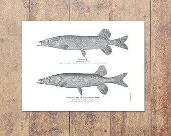 Northern Pike Art in Black and White - Fishing Art Lake House Nautical Decor Ocean Wall Decor Lake Art Gift For Dad Beach Decor Father's Day