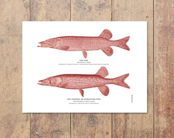 Northern Pike Art in Red- Fishing Print Pike Art Lake Home Decor Cottage Decor Nautical Decor Lake Art Home Decor Gifts For Dad Father's Day