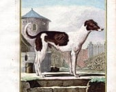 1766 SHEPHERD Color Plate Antique Animal Dog Printn Buffon Quarto