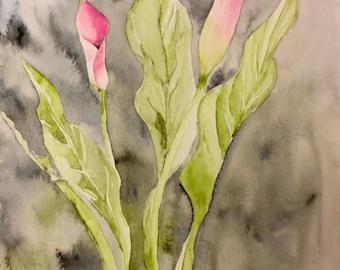 Pink Cali lillies