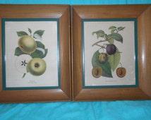 Vintage Art by Rudolf Lesch- 2 Framed Pochoir Hand Colored Fruit Prints- vintage art
