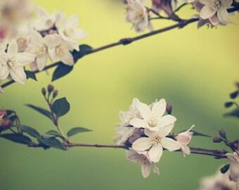 String of Flowers - Photo Print, flower photography, spring, botanical art print