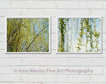 Photography nature print set, 2 botanical pictures 8x10, green and blue wall art, Willow tree branch art, bathroom wall art, yellow avocado