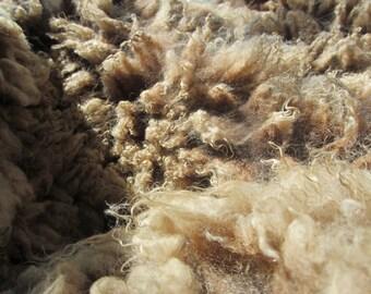 Shetland sheep wool fleece, raw, skirted