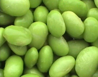 Edamame Midori Giant 15 seeds
