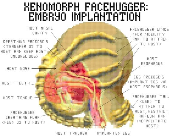 Facehugger Implantation Cross Stitch PATTERN from KnerdlyKnits on ...