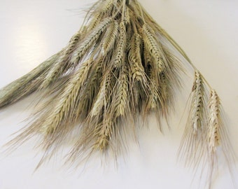 Dried Wheat Bouquet - 1 bundle of 50 stems