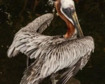 Graceful Aquatic Birds  Giclee Print  V590289.2