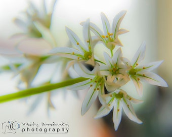 Nature photography, Flower photos, Spring, Art home decor, Fine Art Photograph, Macro photography