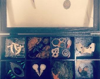 Curiosity Cabinet Box