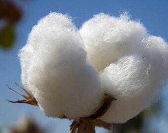 Upland Cotton Seeds (Gossypium hirsutum) 20+Seeds