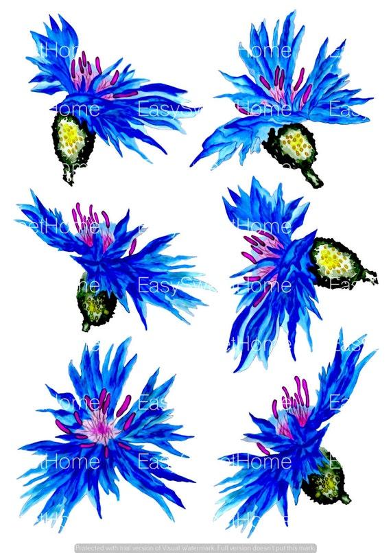 Fliesenaufkleber kachelaufkleber aquarell kornblumen bord re kacheldekor 6 stk ebay - Fliesenaufkleber gras ...