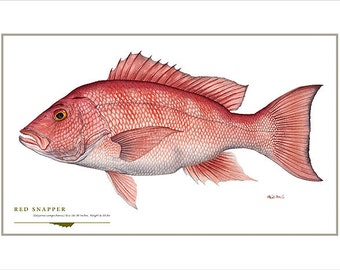 Red snapper etsy for Red saltwater fish