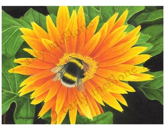 Bumblebee On Orange Gerbera Flower Art Print