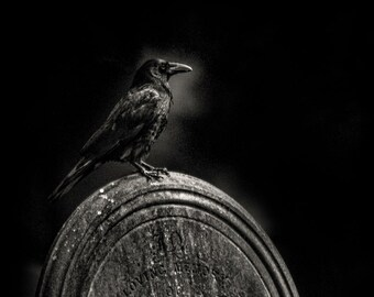 """An original fine art photographic Giclée print. """"Morticia the Crow"""" one of the graveyard crows"""