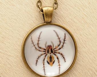 Arachnida - Scientific Illustration - Pendant Necklace - Science Jewelry