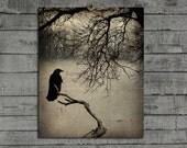 Rustic Crow Photograph, Blackbird Art Decor, Raven Print, Rook, Gothic, Woodland Image, Nature, Bird, Dark, Fog, Aged - Beacon In The Fog