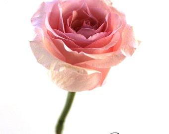 Pink rose photo,  pink flower photo, floral wall art, pink decor, little girl decor, nursery decor, pink flower art, romantic photo