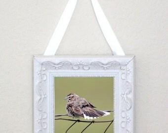 sparrow photo, shabby decor photo, bird photo, small framed print, framed bird photo, shabby framed photo, framed sparrow print, bird print