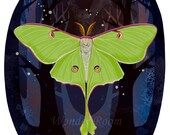 A7 SINGLE- Actias Luna moth, crescent moon lit, shadow cut trees