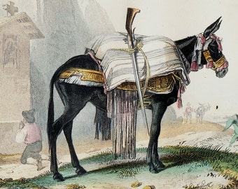 1848 Antique MULE print. The offspring of a donkey and a horse, Fine hand colored engraving. Original antique