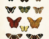 Vintage Butterfly Series Plate No. 5 - Giclee Canvas Art Print - Print - Poster - Canvas Wall Hanging - Natural History Art - Wall Decor