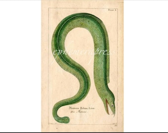 EEL - GREEN MORAY serpent sea sealife marine print