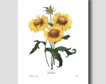 Sunflower Art (French Country Wall Decor, Botanical Art Print) --- Redoute Yellow Flower Print No. 44