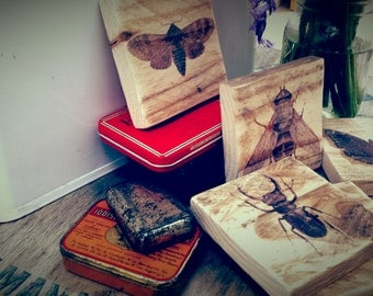 Reclaimed wood coasters (set of four) with vintage insect illustrations. Upcycled pallet art.