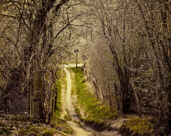Forest Photography, Winding Path, Nature Photo, Green, Woodland, Trees, Fairytale Forest, Into the Woods, Path of Life, Nature Home Decor