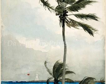 Winslow Homer Watercolor Reproductions. Palm Tree, Nassau - 1898. Fine Art Print.