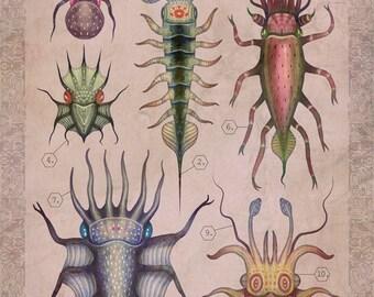 Cepharthropoda IV - A4 art print
