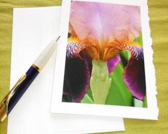 Purple Iris Flower Photo Blank Notecard with Deckle Edge - #IRIS010