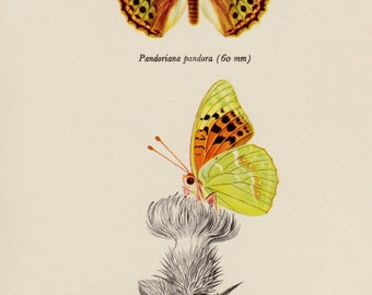 Vintage BUTTERFLY Art Print Antique Butterfly Insect Print Autumn Gallery Wall Art Office Library Decor Cottage Decor 1663
