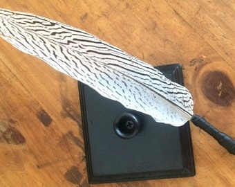 Silver Pheasant *Feather Quill*