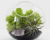 Amethyst Cluster Air Plant Tabletop Terrarium Kit