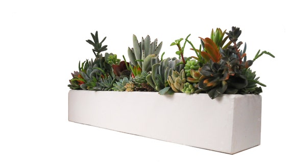 Succulent in a Concrete 24 Large White Rectangular by Window27