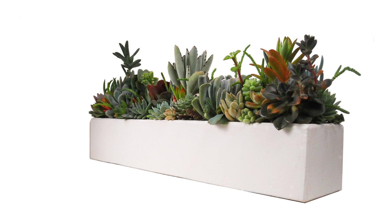 Succulent concrete centerpiece arrangement large
