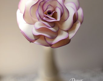 White Rose with Lilac Tips