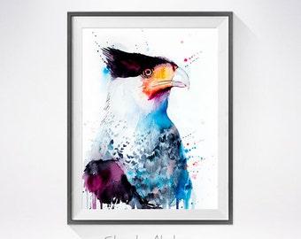 Northern Crested Caracara watercolor painting print, Caracara art, animal watercolor, animal illustration, Caracara illustration, bird art,