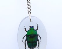 3 x Real Insect Key Ring / Bug Key Chain, Insects in Resin