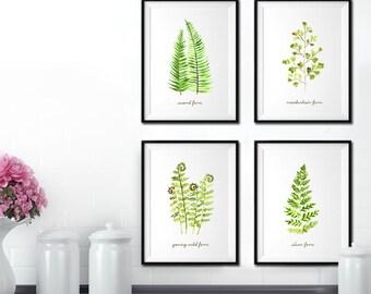 Fern watercolor painting, Botanical print, Garden print, Fern print, Set of 4, Botanical art, Living room decor, Spring art, Green leaf art